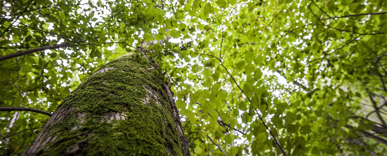 Educazione ambientale e alla sostenibilità